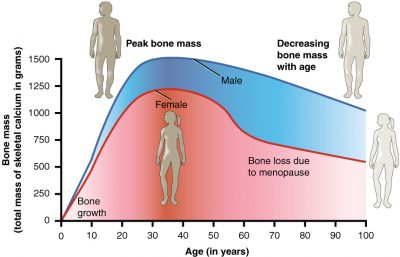bone mass vs age